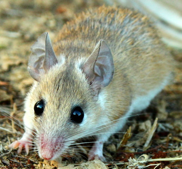Pest Control Exterminator Services In Brownwood Andy S