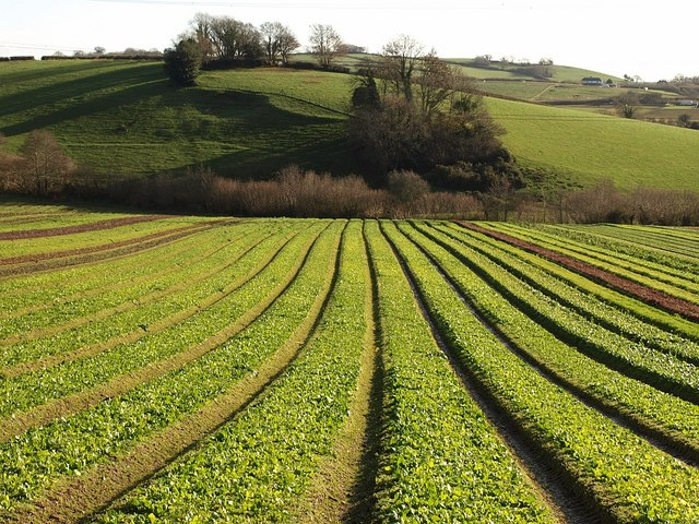 File crops riverford for Soil information in english