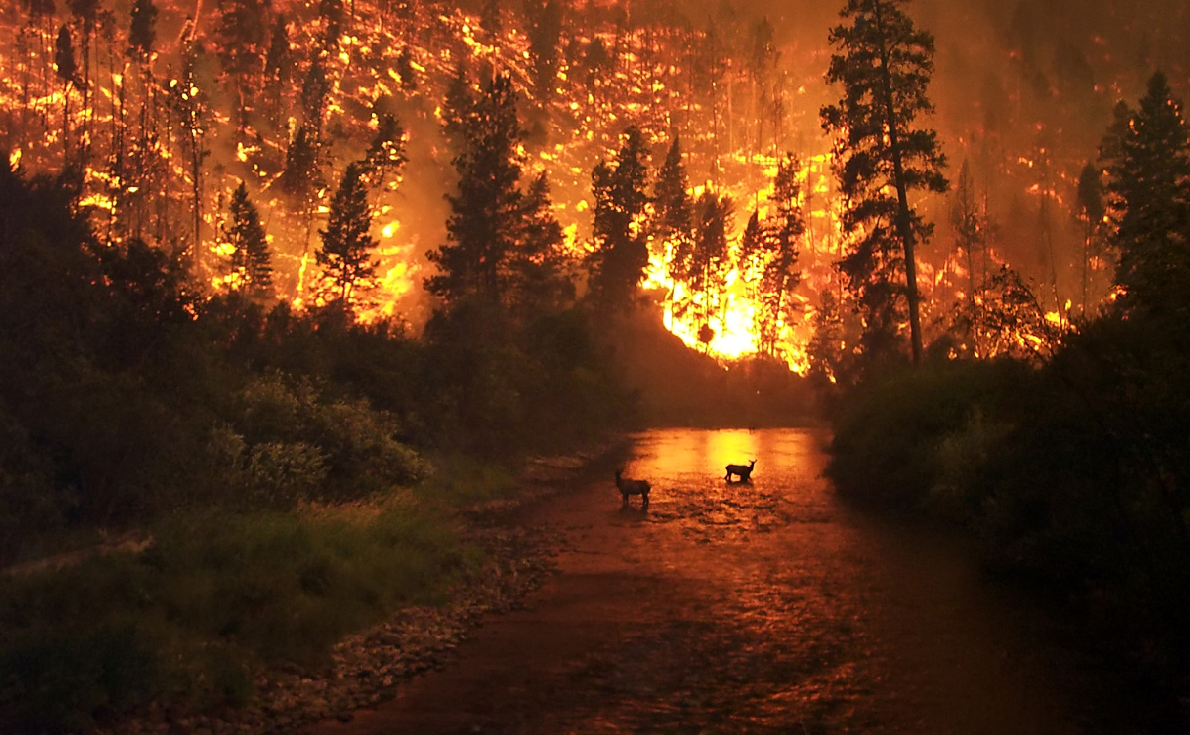 Wildfire at night, behind silhouetted forest, and reflected in a river.