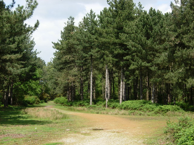 Dunwich Forest - geograph.org.uk - 178217