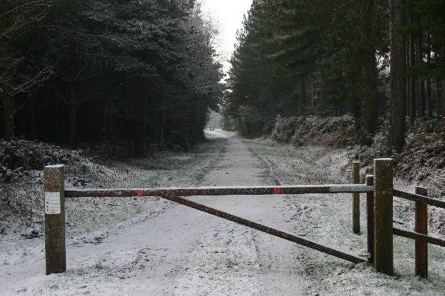 Entrance to Wheldrake Wood - geograph.org.uk - 100503