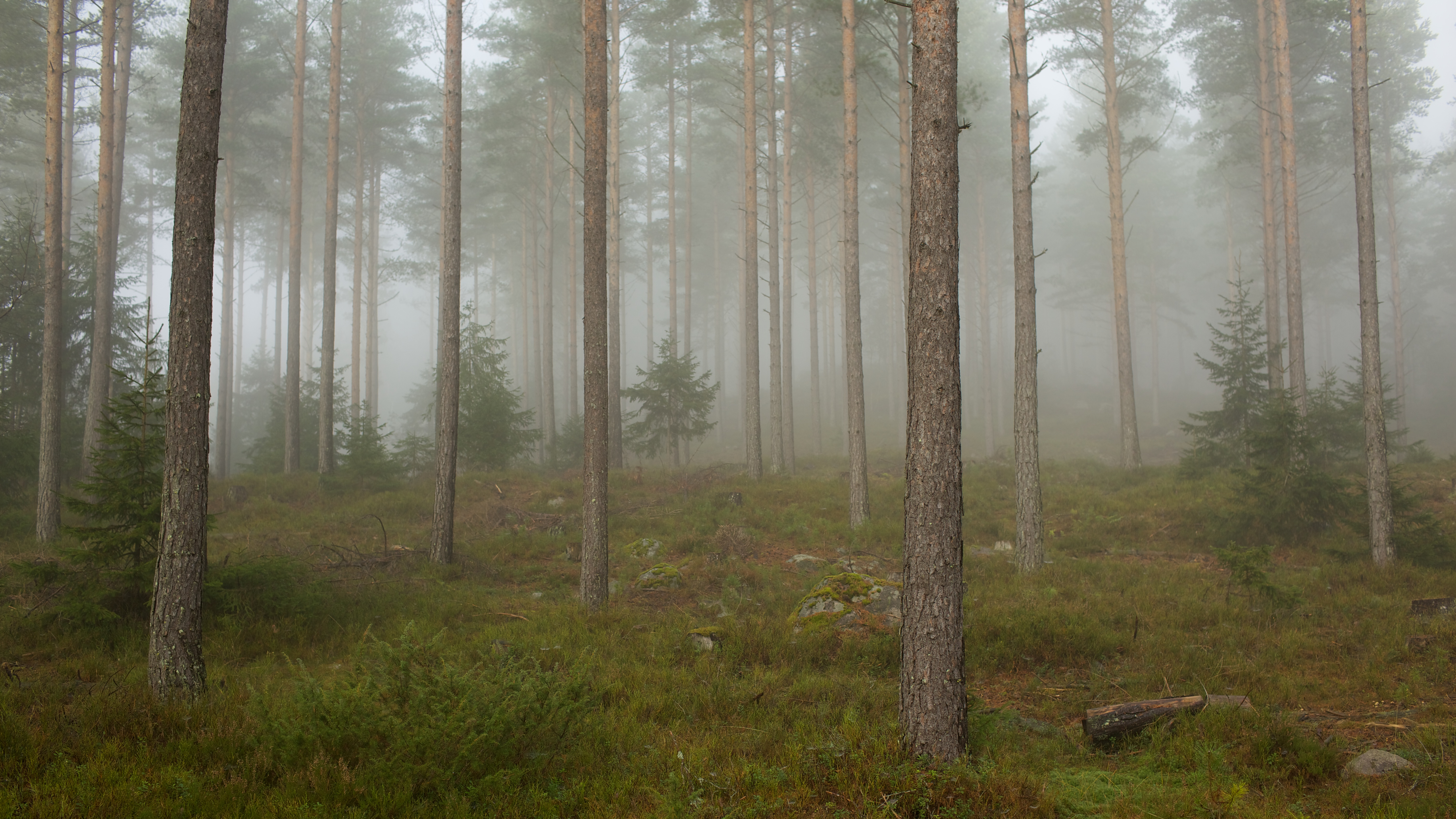 http://upload.wikimedia.org/wikipedia/commons/d/d8/Fog_in_a_forest,_Telemark_2.jpg
