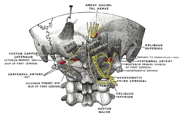 third occipital nerve