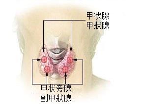 亢進 症 機能 甲状腺