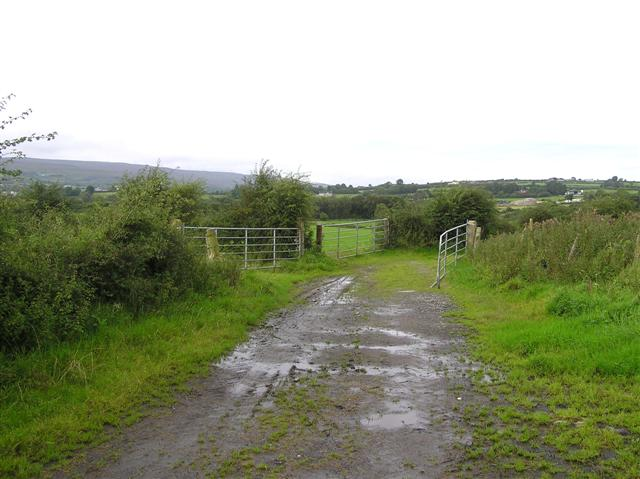 File:Lane, Creevy - geograph.org.uk - 1460524.jpg