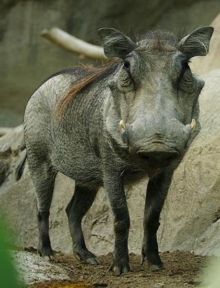 Image:Lightmatter warthog.jpg