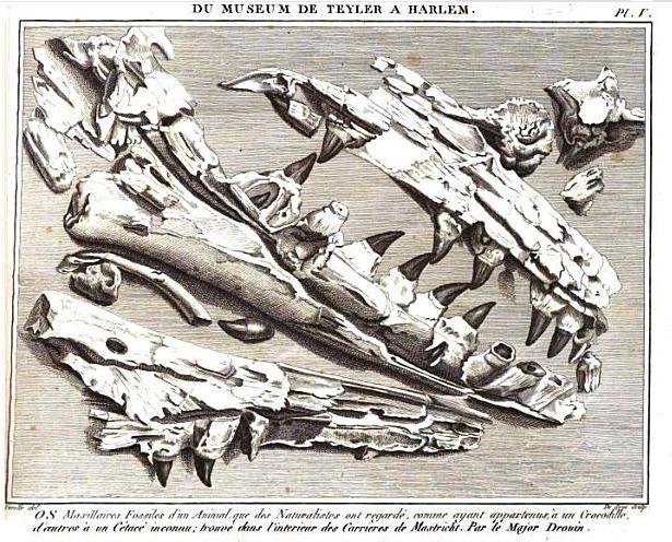 File:Mosasaurus Teylers Museum - Faujas de Saint-Fond.png