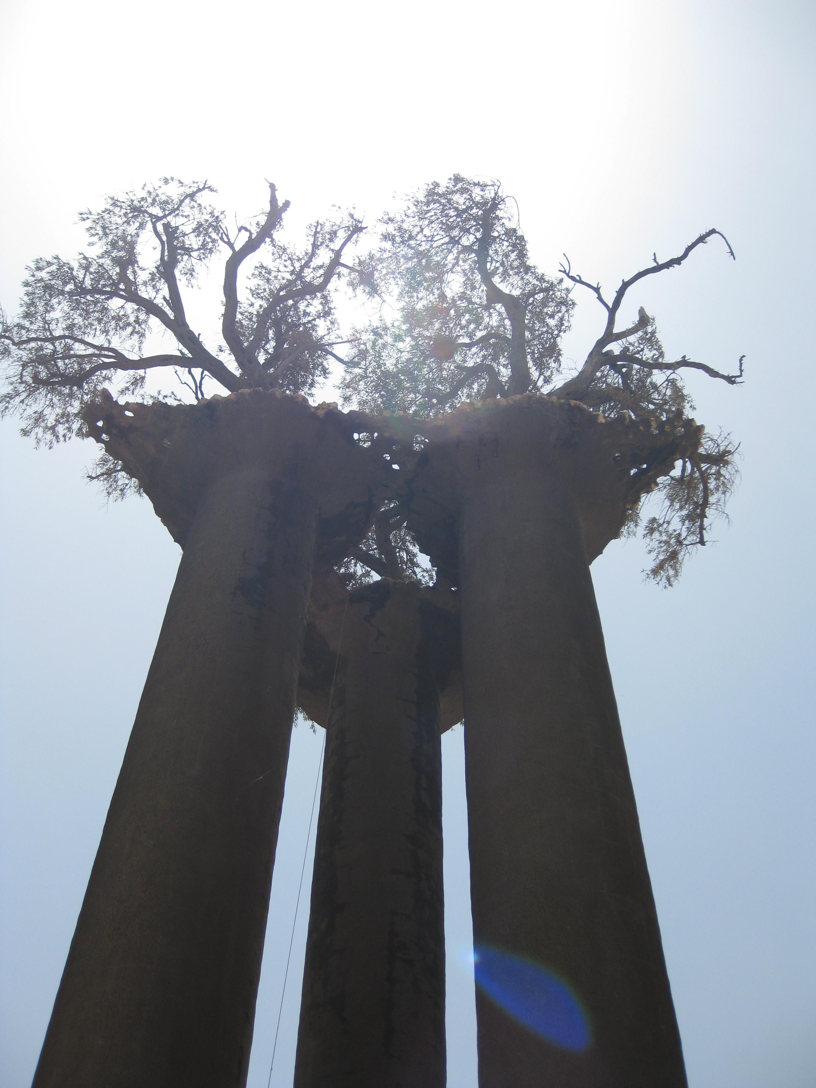 פסל עצי הזית