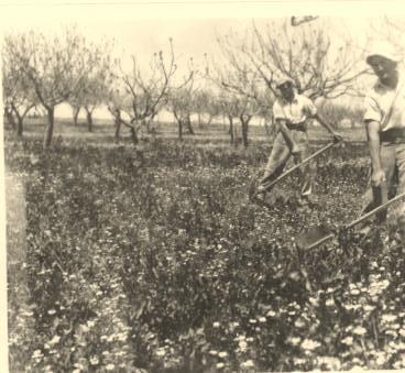 כפר עציון  1943