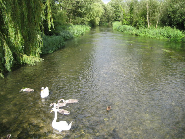 River Kennet at Ramsbury - geograph.org.uk - 1409635