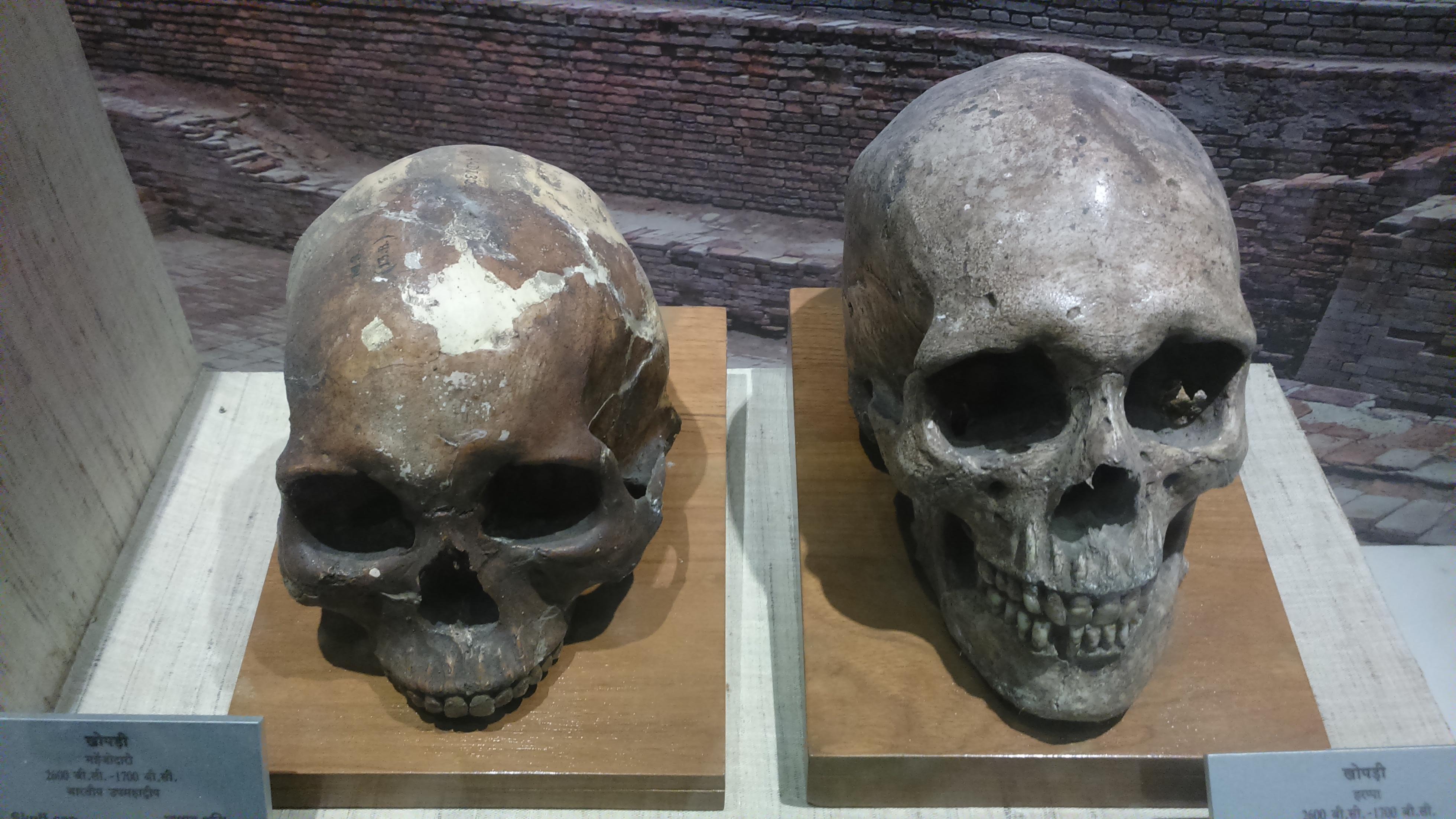 Skull of Indus Valley inhabitants, Photo by Royroydeb