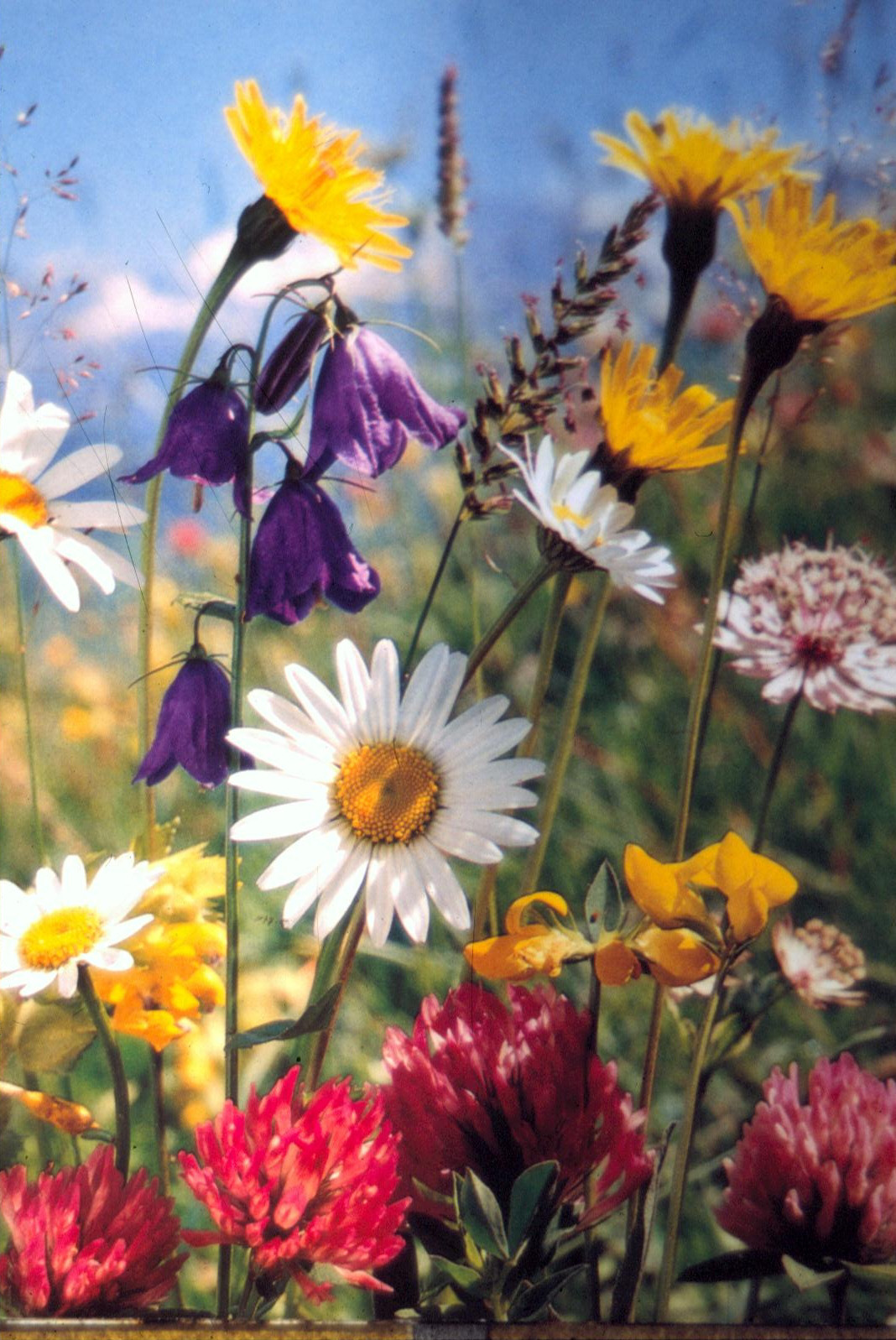 Flowers - Wikimedia Commons