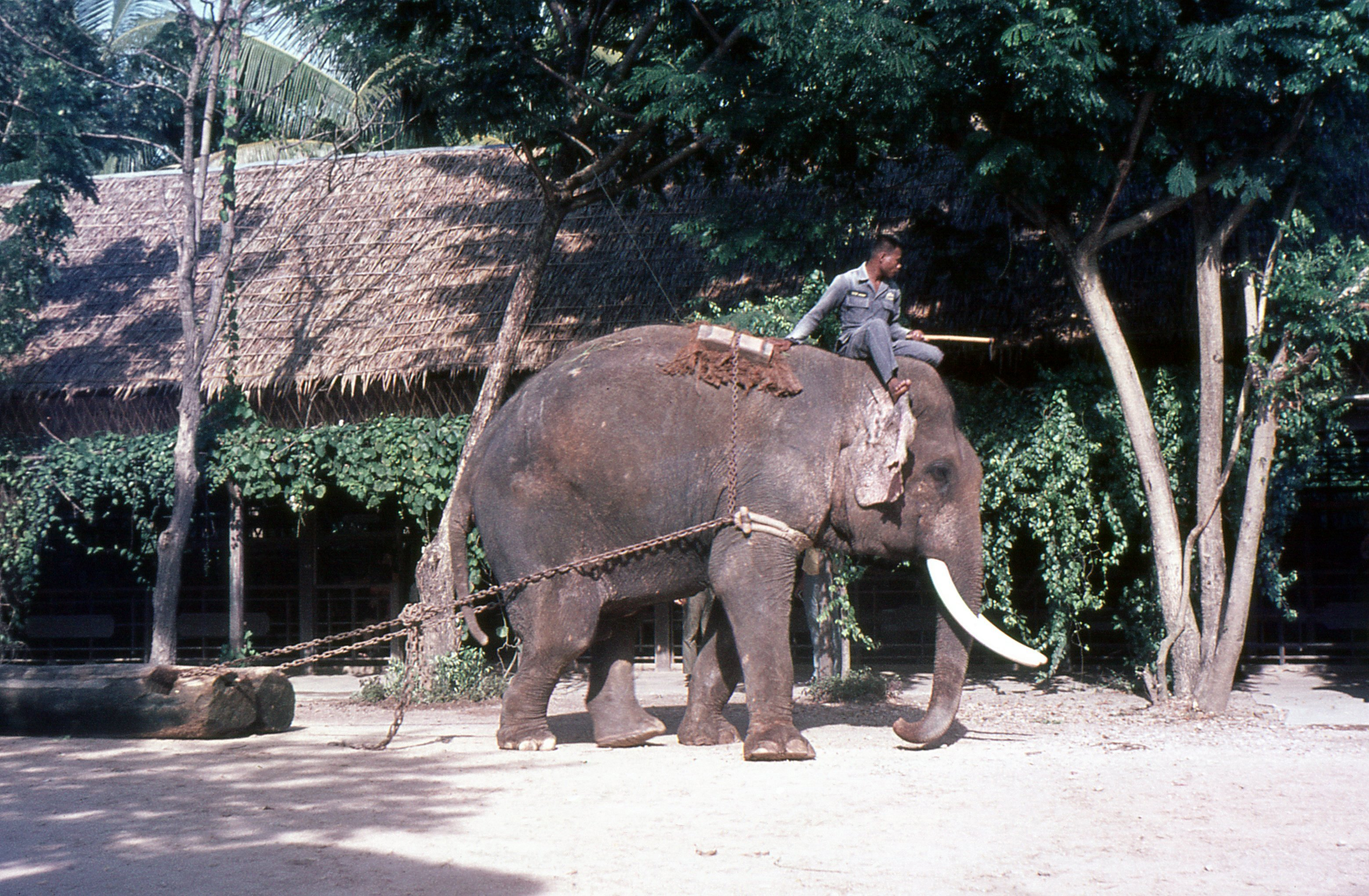 Elephants In Thailand Wikiwand