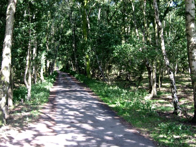 The Avenue into Skipwith Common - geograph.org.uk - 201016