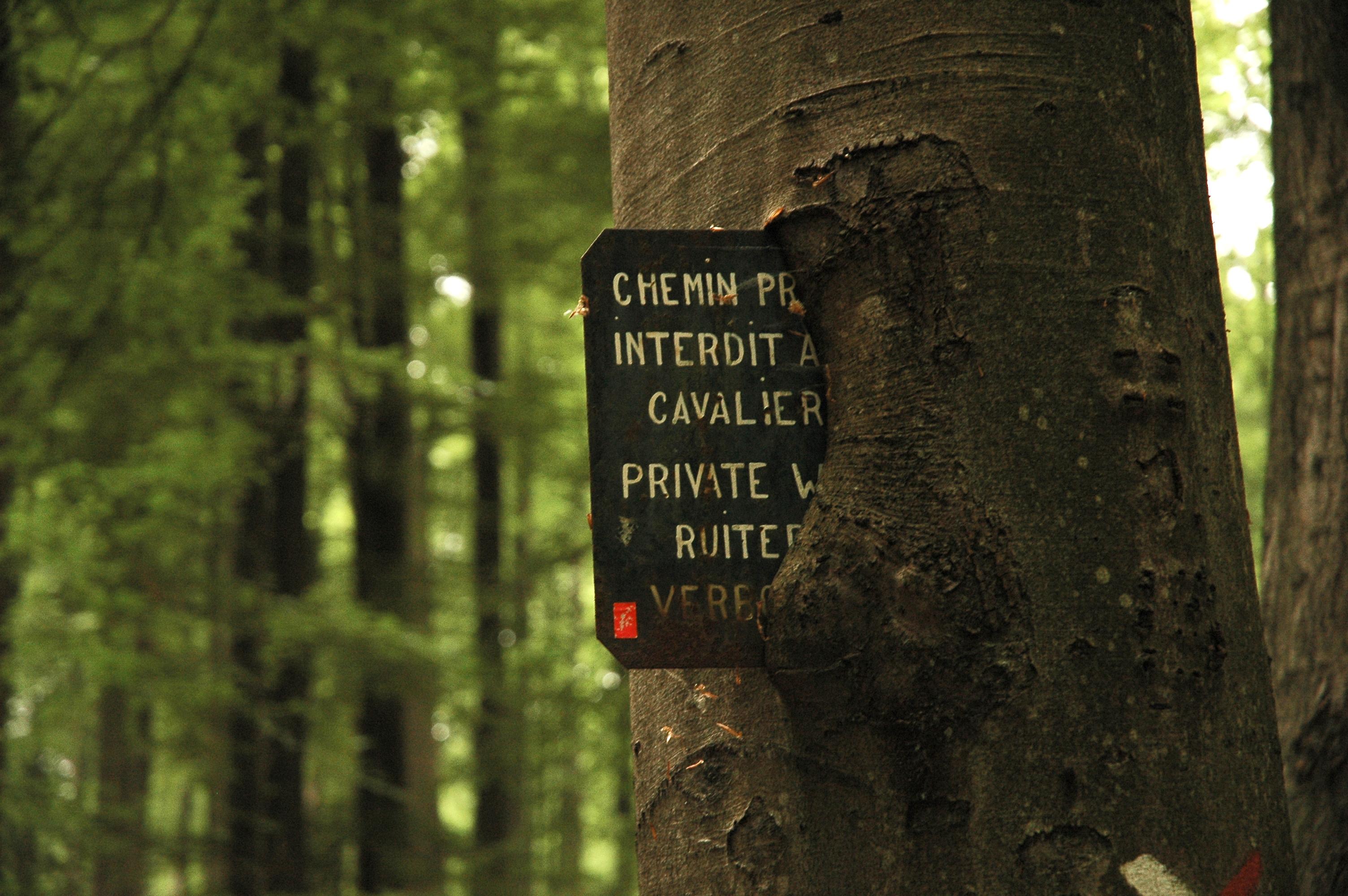 File tronc d 39 arbre dans la for t de soignes bruxelles expo jpg wiki - Maison en tronc d arbre ...