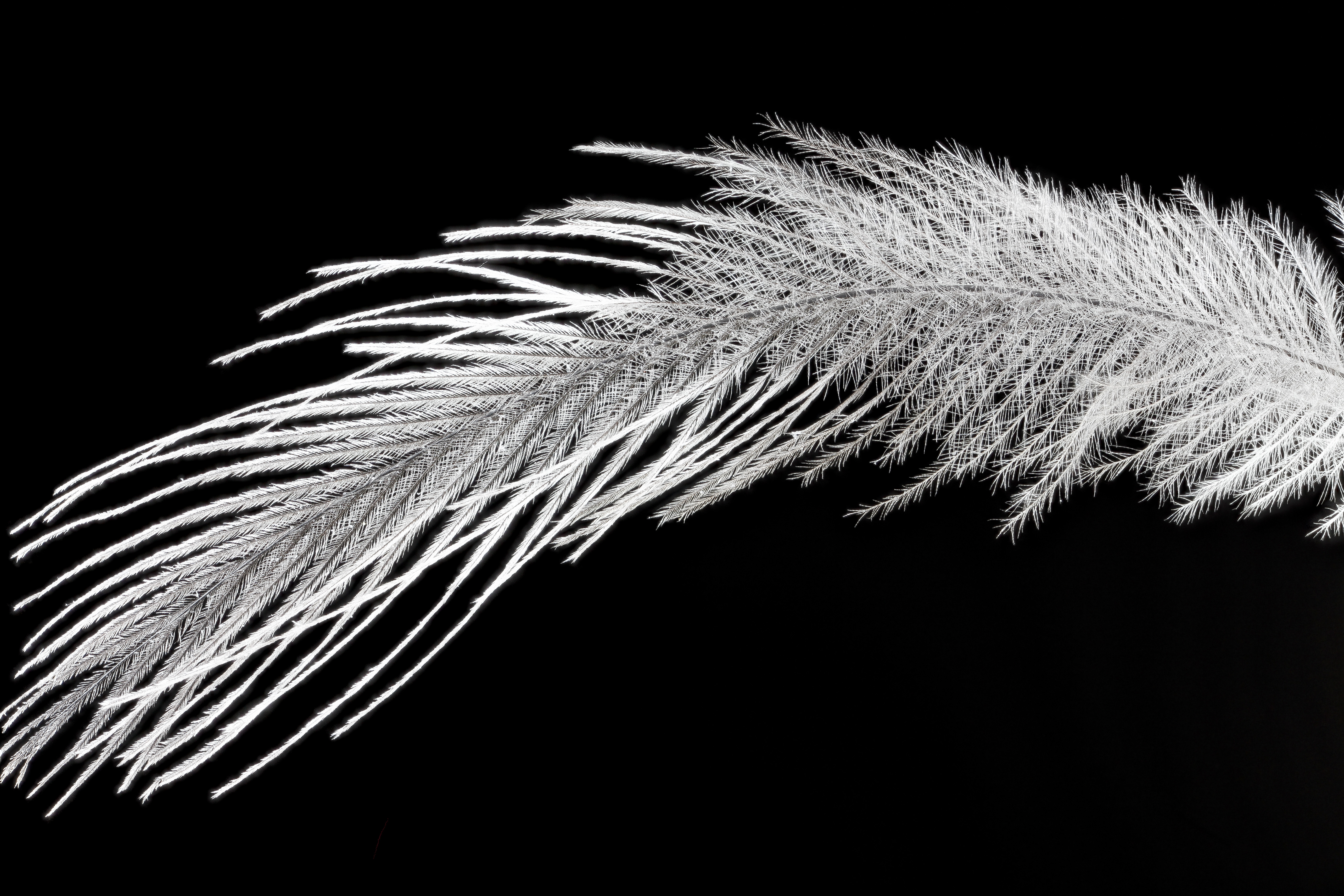 File Whooping Crane Feather 2012 09 25 16 33 16 Zs Pmax
