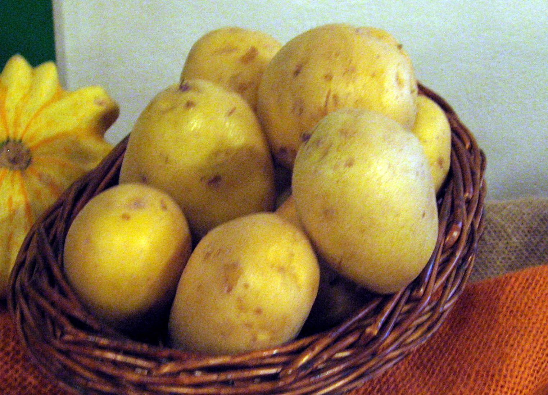 Agria pomme de terre wikiwand - Pomme de terre rissolees maison ...