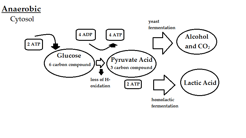 electron donors and acceptors in anaerobic respiration