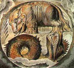 Behemoth & Leviathan