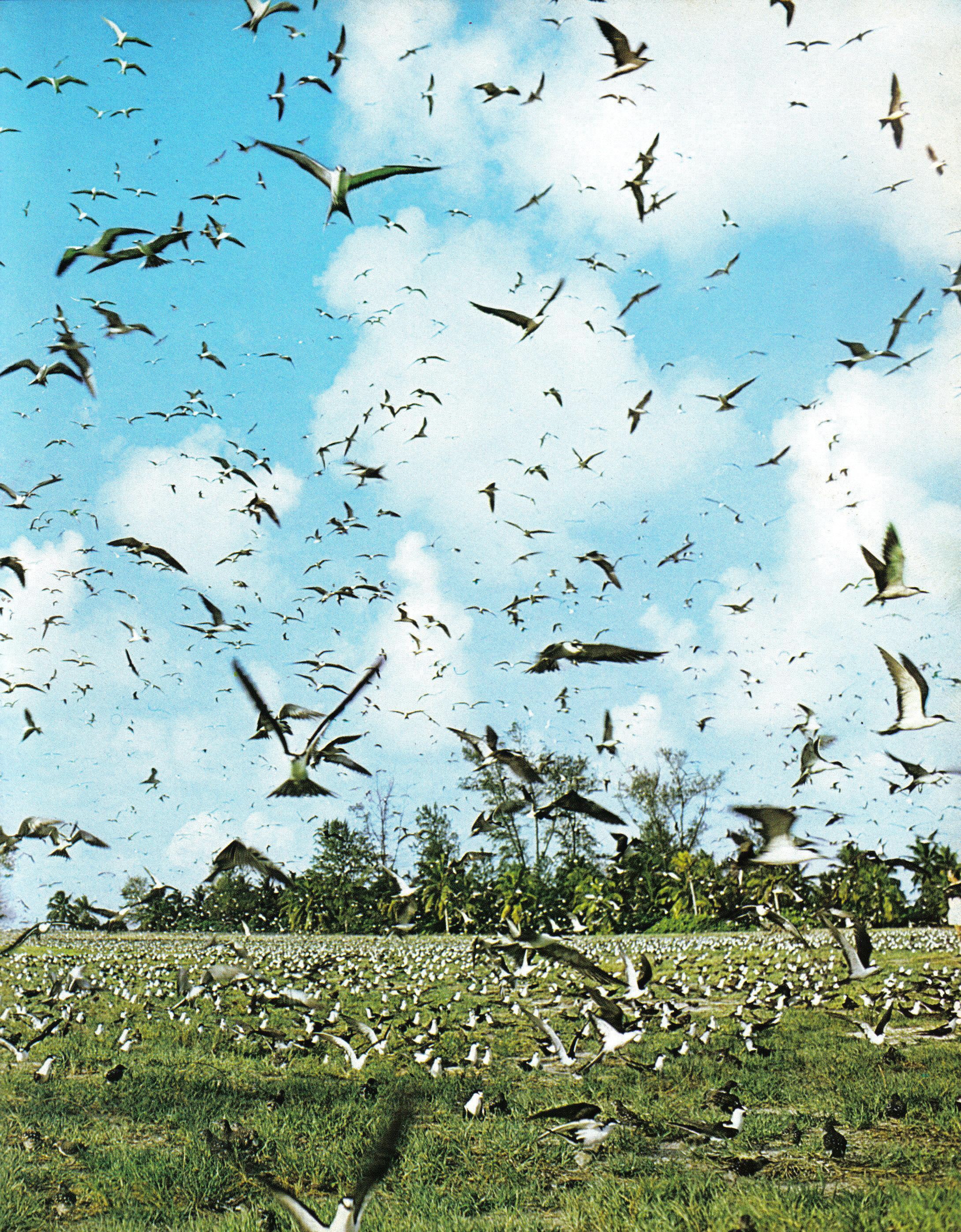 bird flocks bird island seychelles.jpg