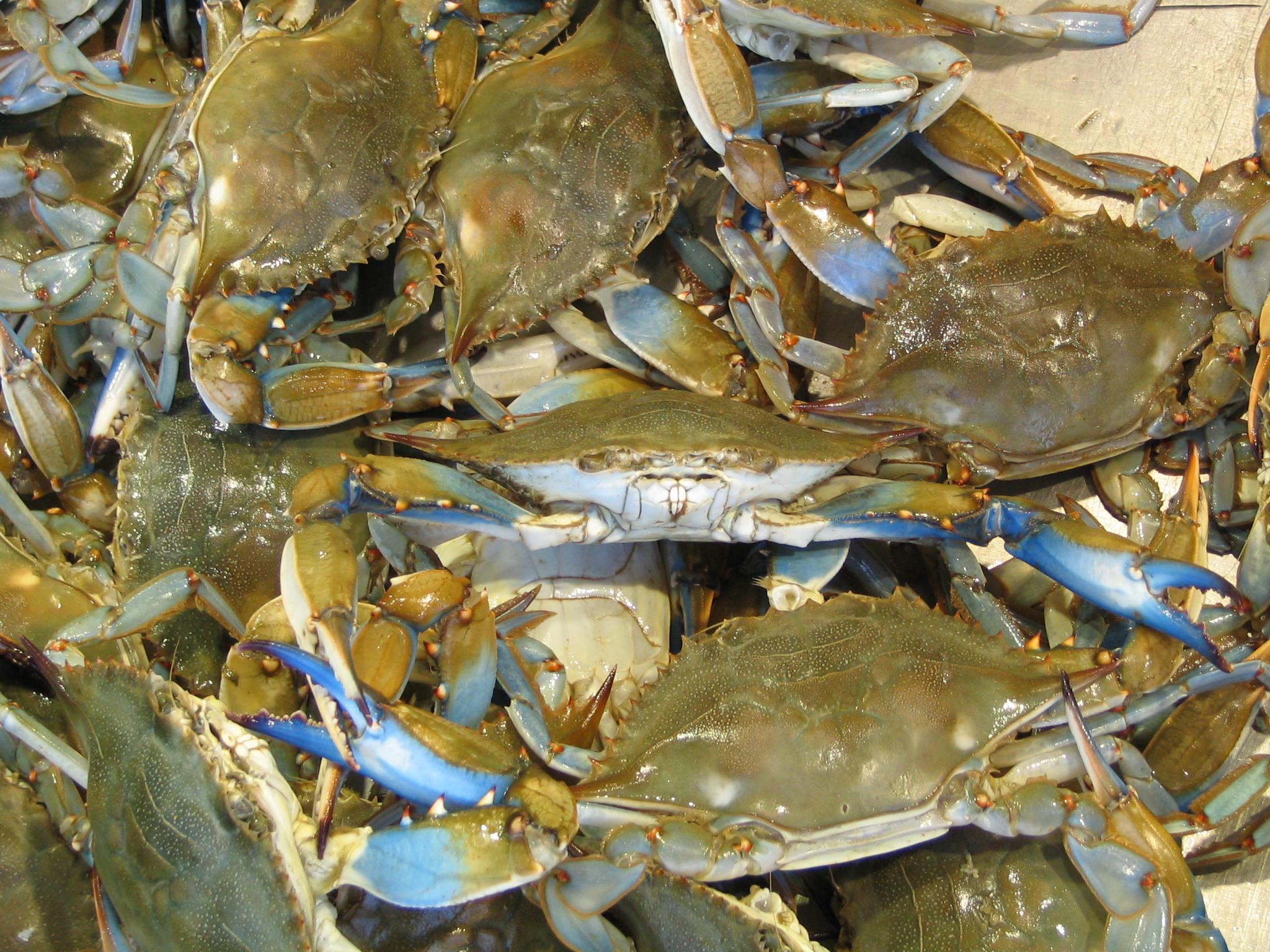 Estuaries december 2010 for Blue crab fishing