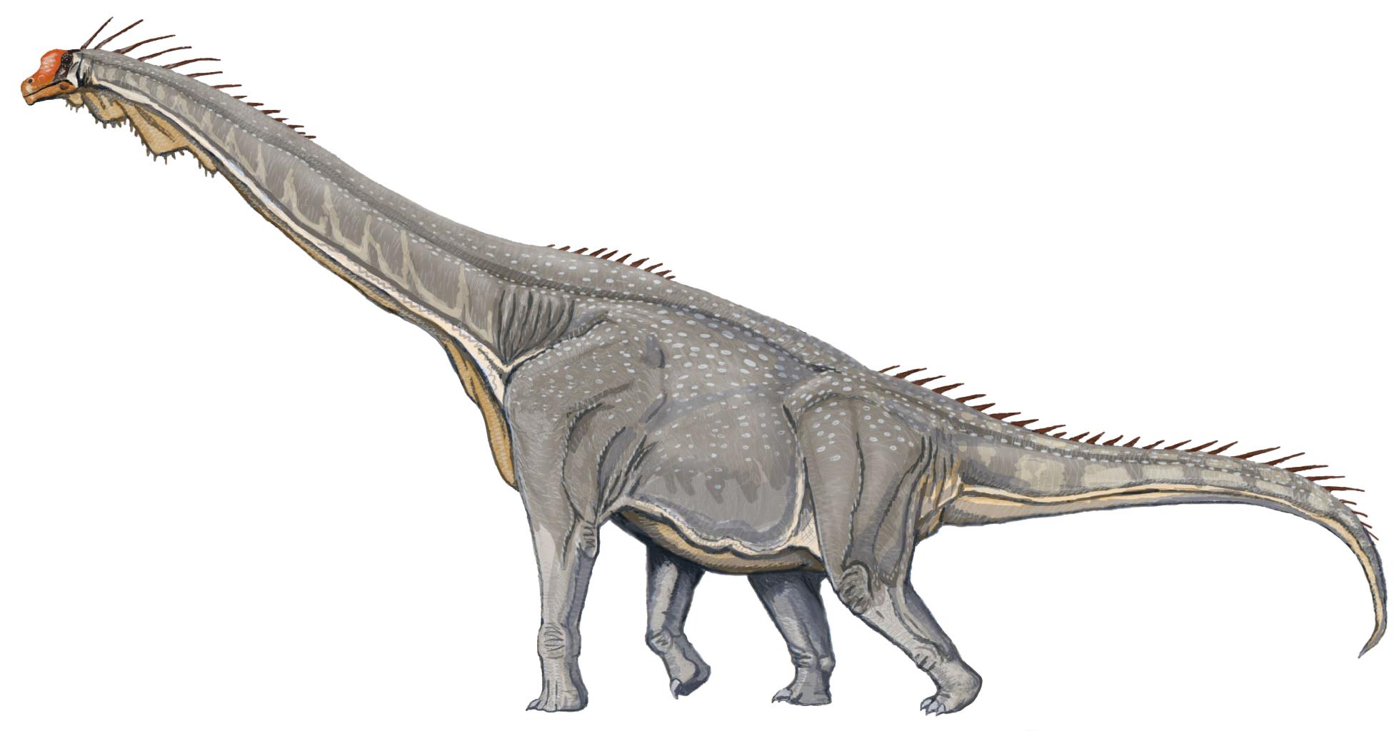 ファイル brachiosaurus db jpg wikipedia