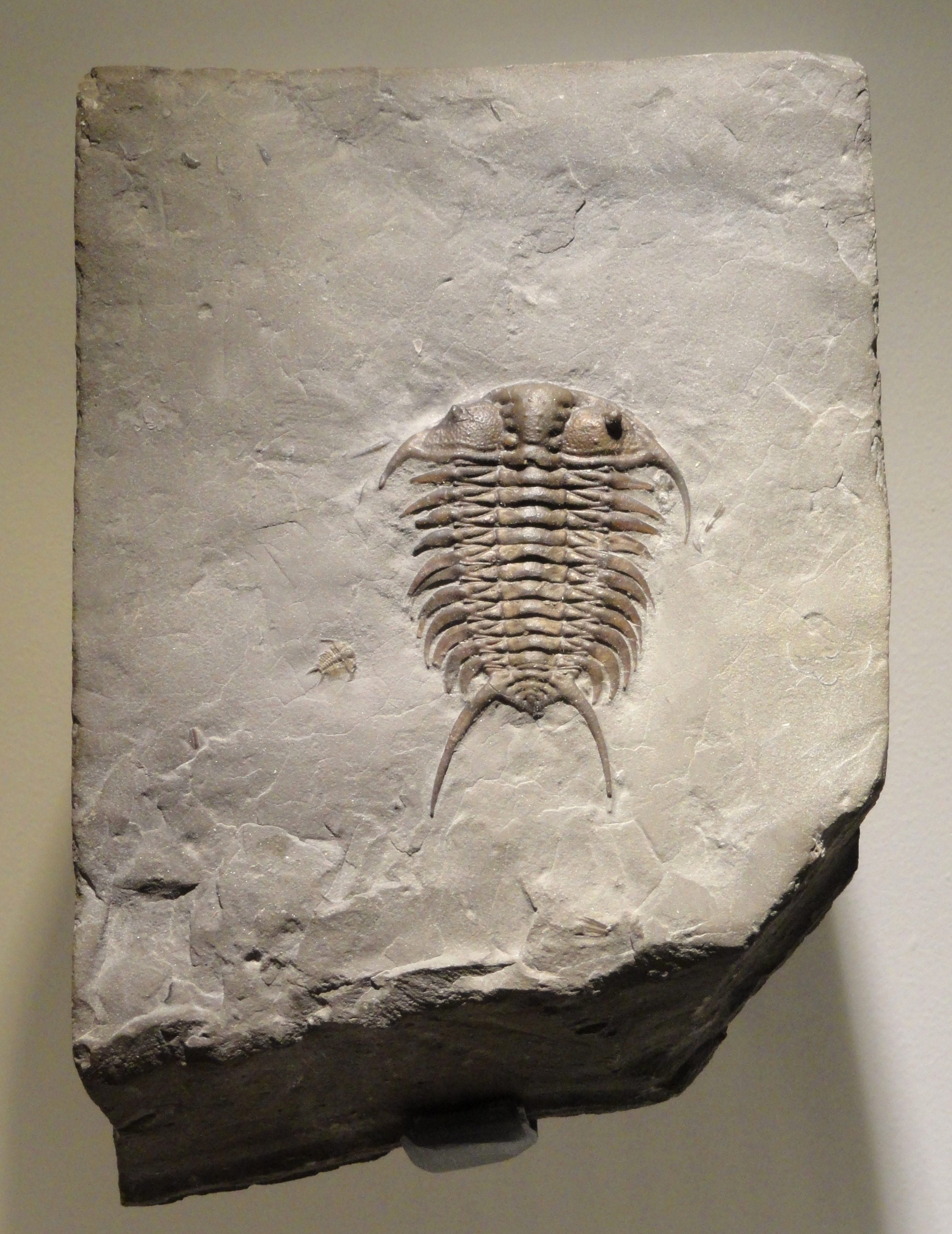 Trenton Museum Natural History