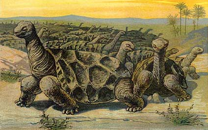 Saddle backed rodrigues giant tortoise wikiwand drawing of a moving herd of cylindraspis vosmaeri on rodrigues publicscrutiny Gallery