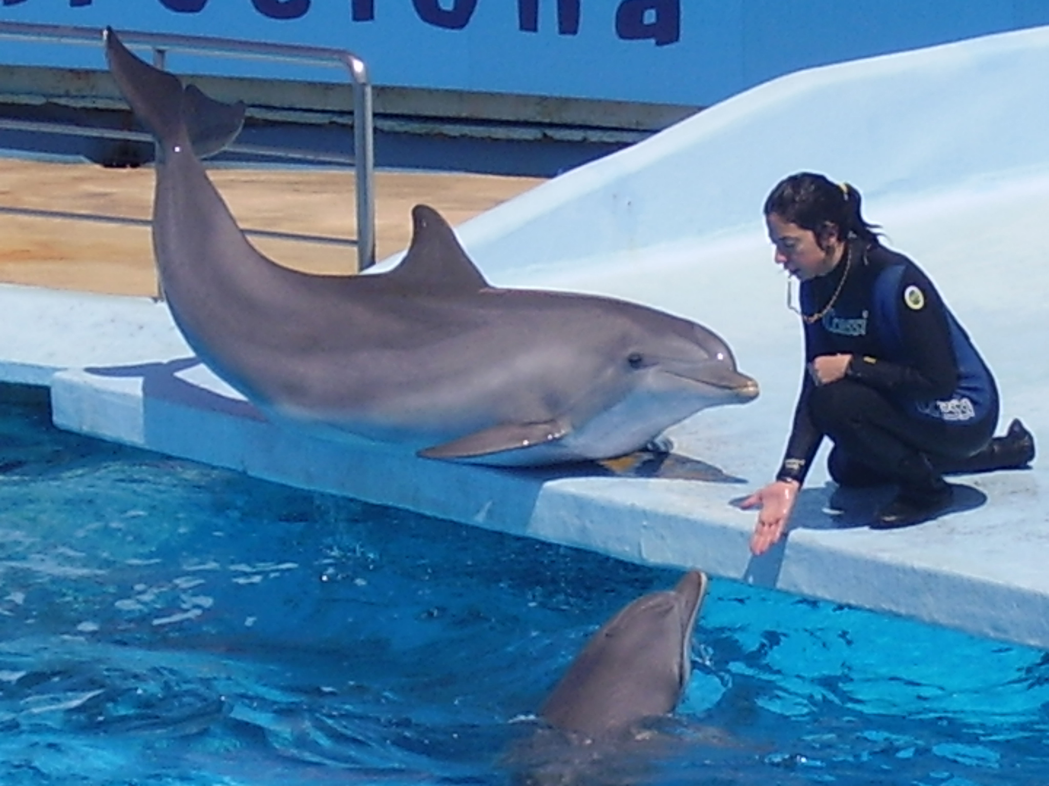 File:Dolphin and trainer 4.jpg - Wikimedia Commons