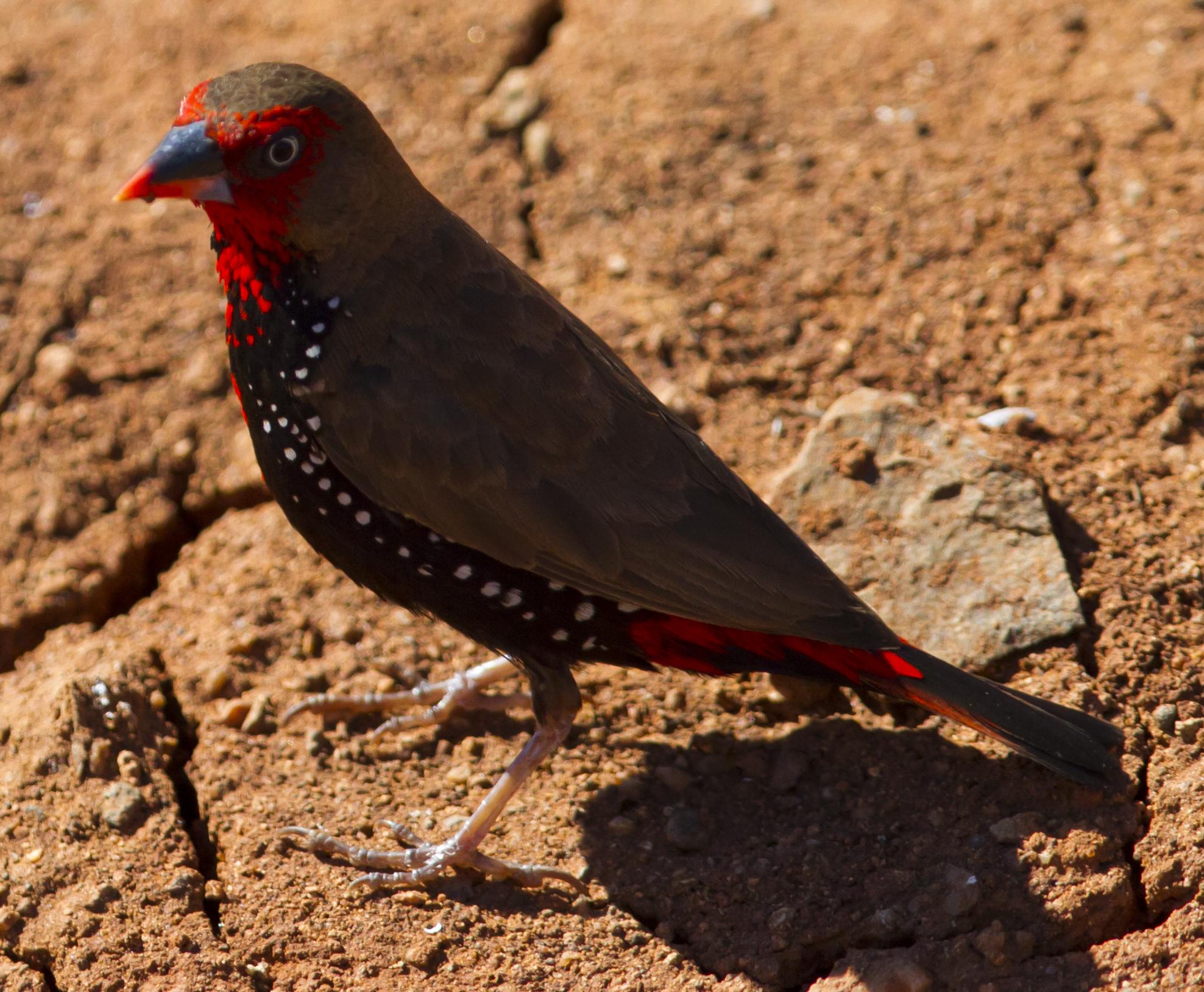 Karratha Australia  city photos gallery : Emblema pictum Karratha, Pilbara, Western Australia, Australia 8 ...