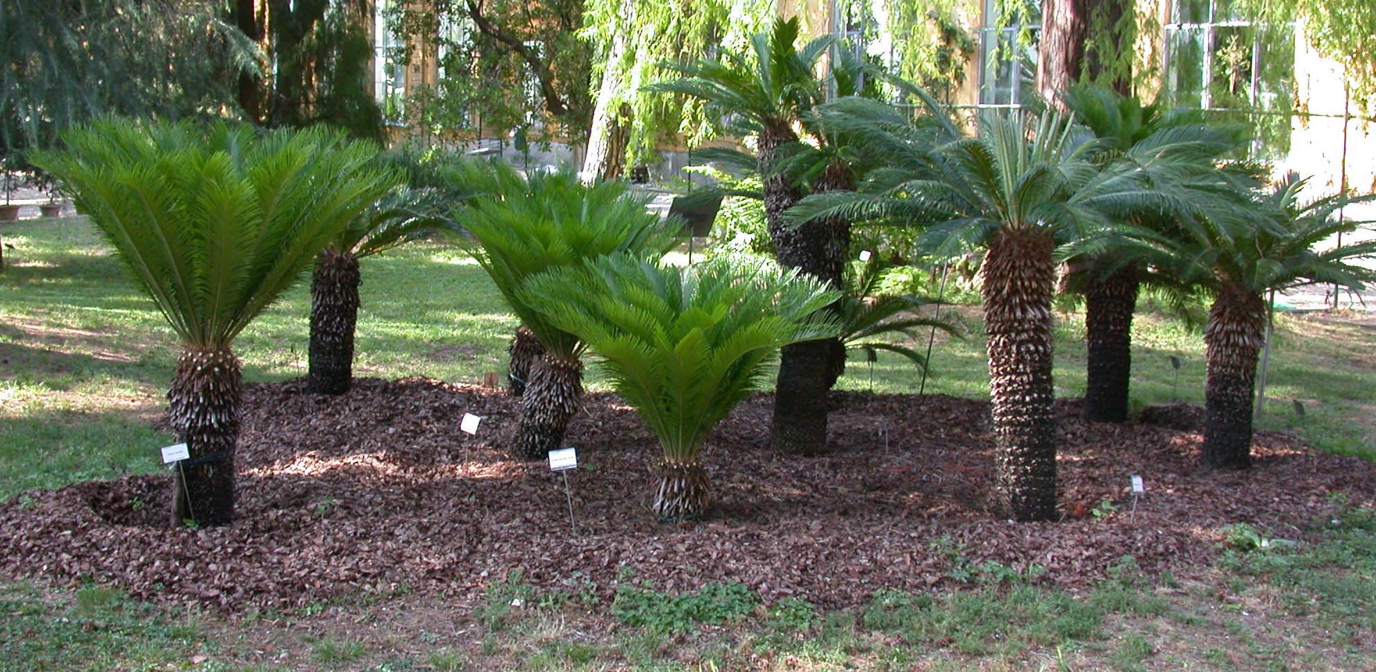 Giardino dei semplici casamia idea di immagine for Giardino orto botanico firenze