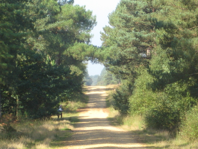 Hurn Forest - geograph.org.uk - 995385