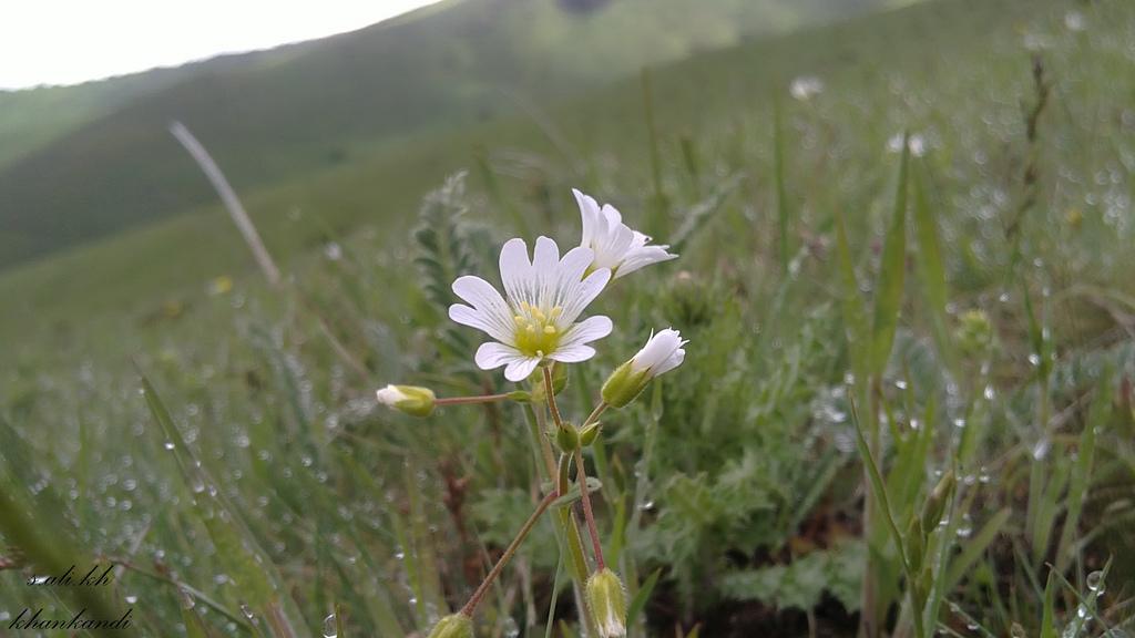 گلی زیبا از طبیعت خان کندی