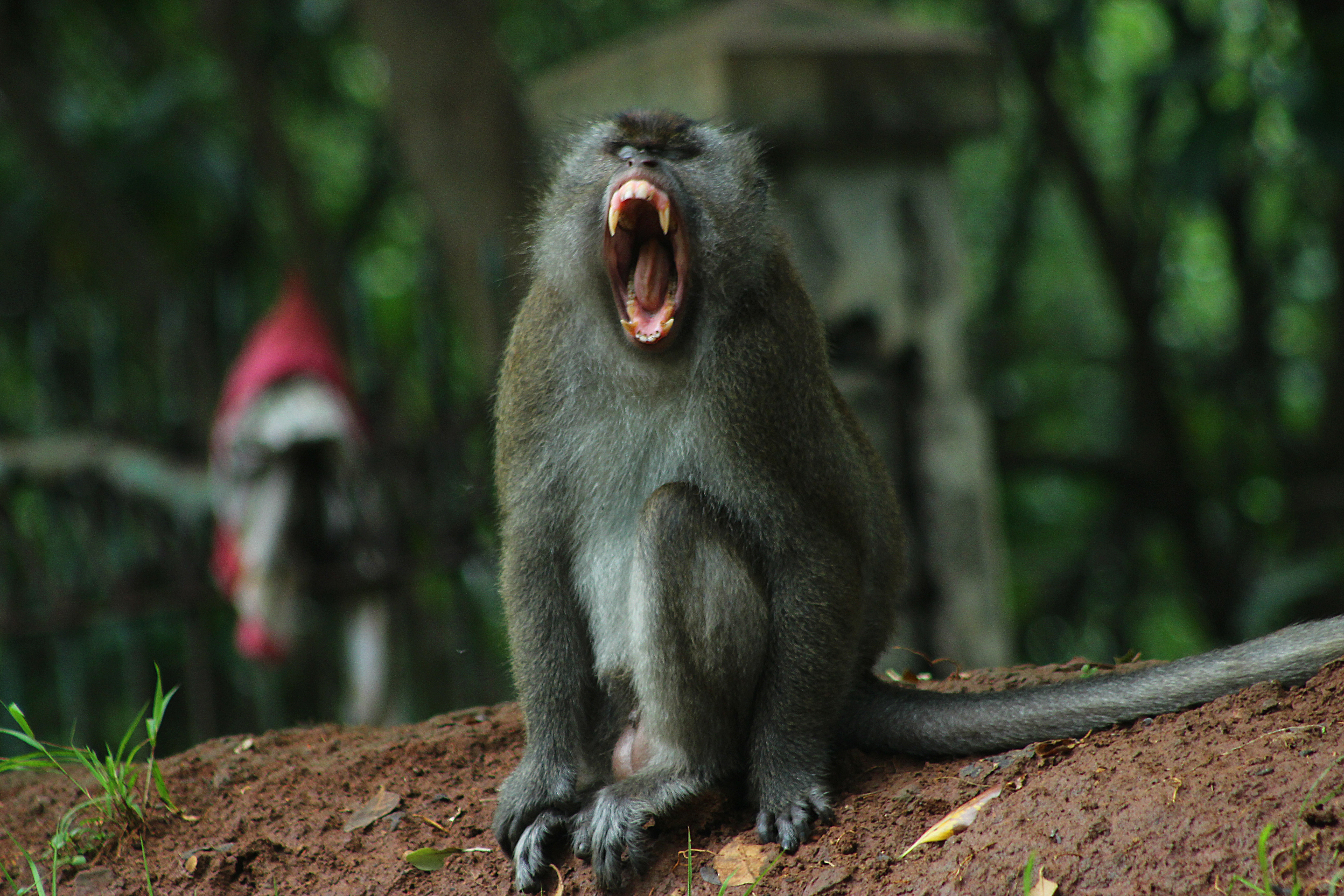 Dating monyet
