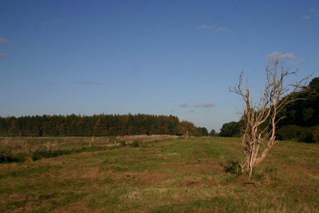 File:Seven Tree Road - geograph.org.uk - 276082.jpg