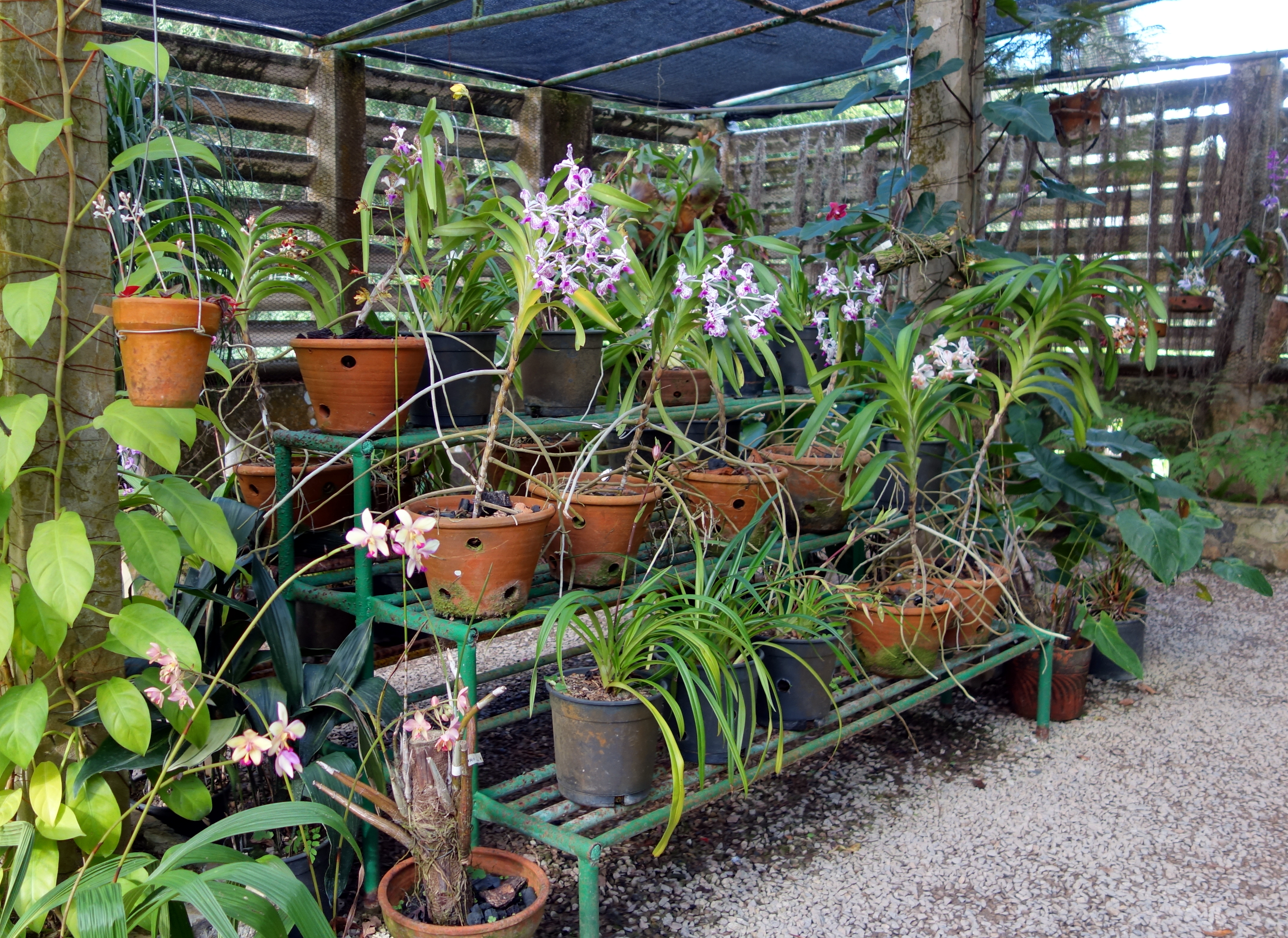 File soroa orchidees jpg wikimedia commons for Jardines de orquideas