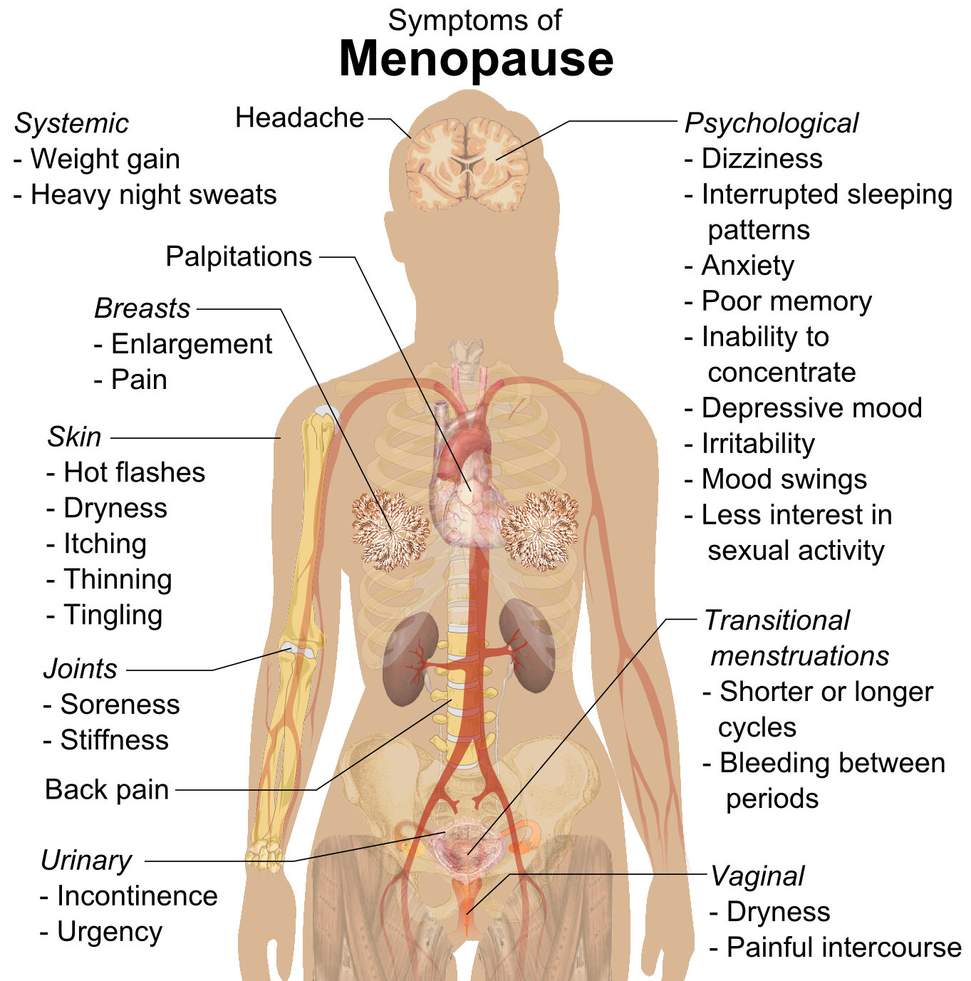 Filesymptoms Of Menopause Rasterg Wikimedia Commons