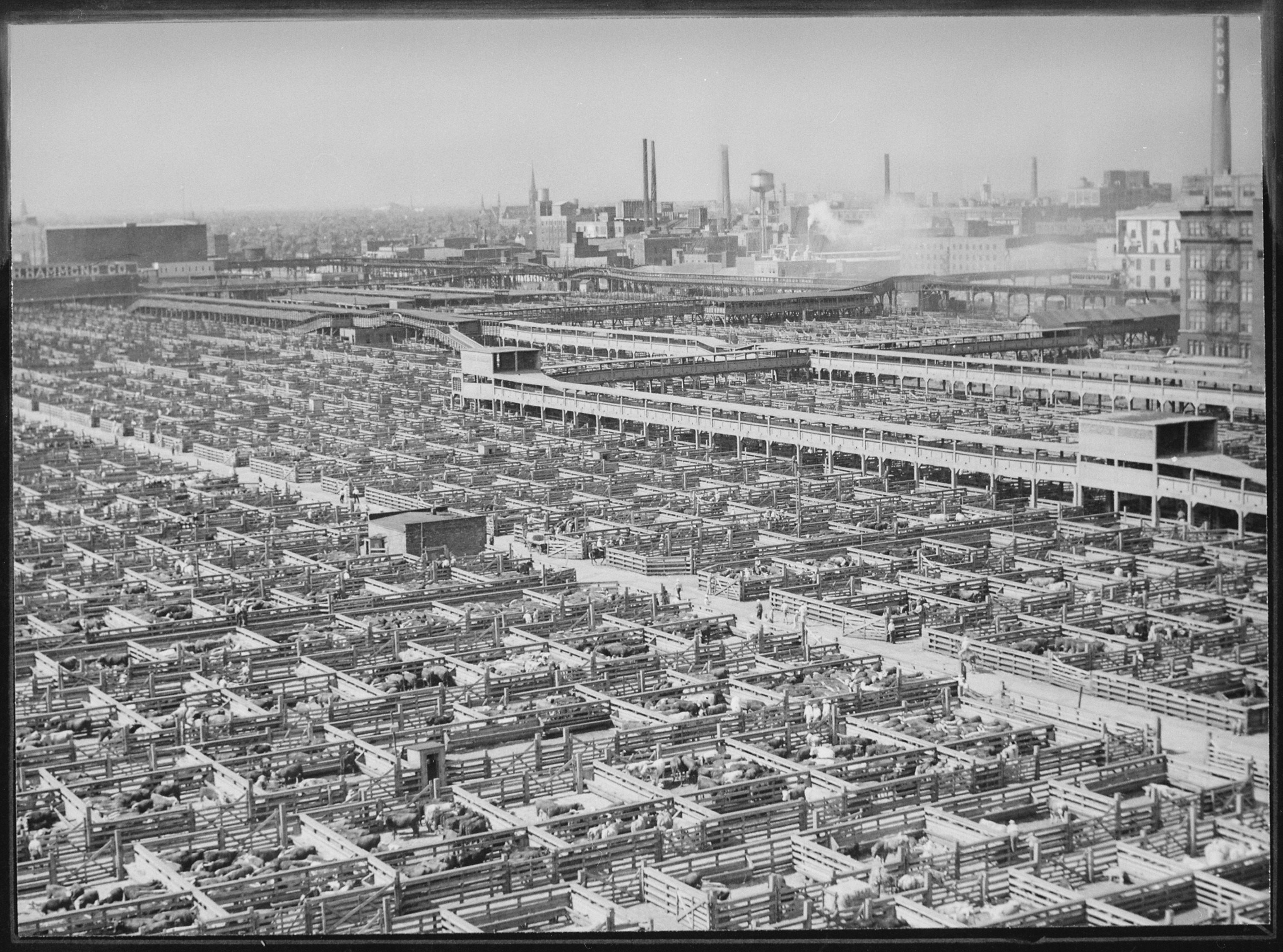 File The Maze Of Livestock Pens And Walkways At Chicago S