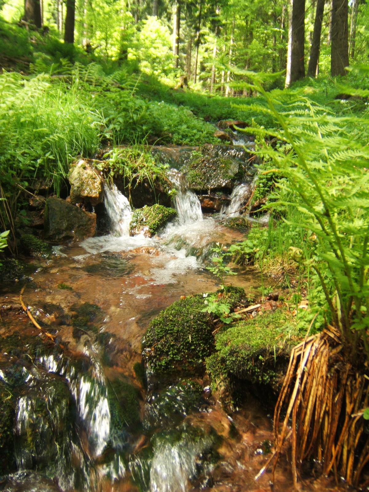 Quelle Fluss