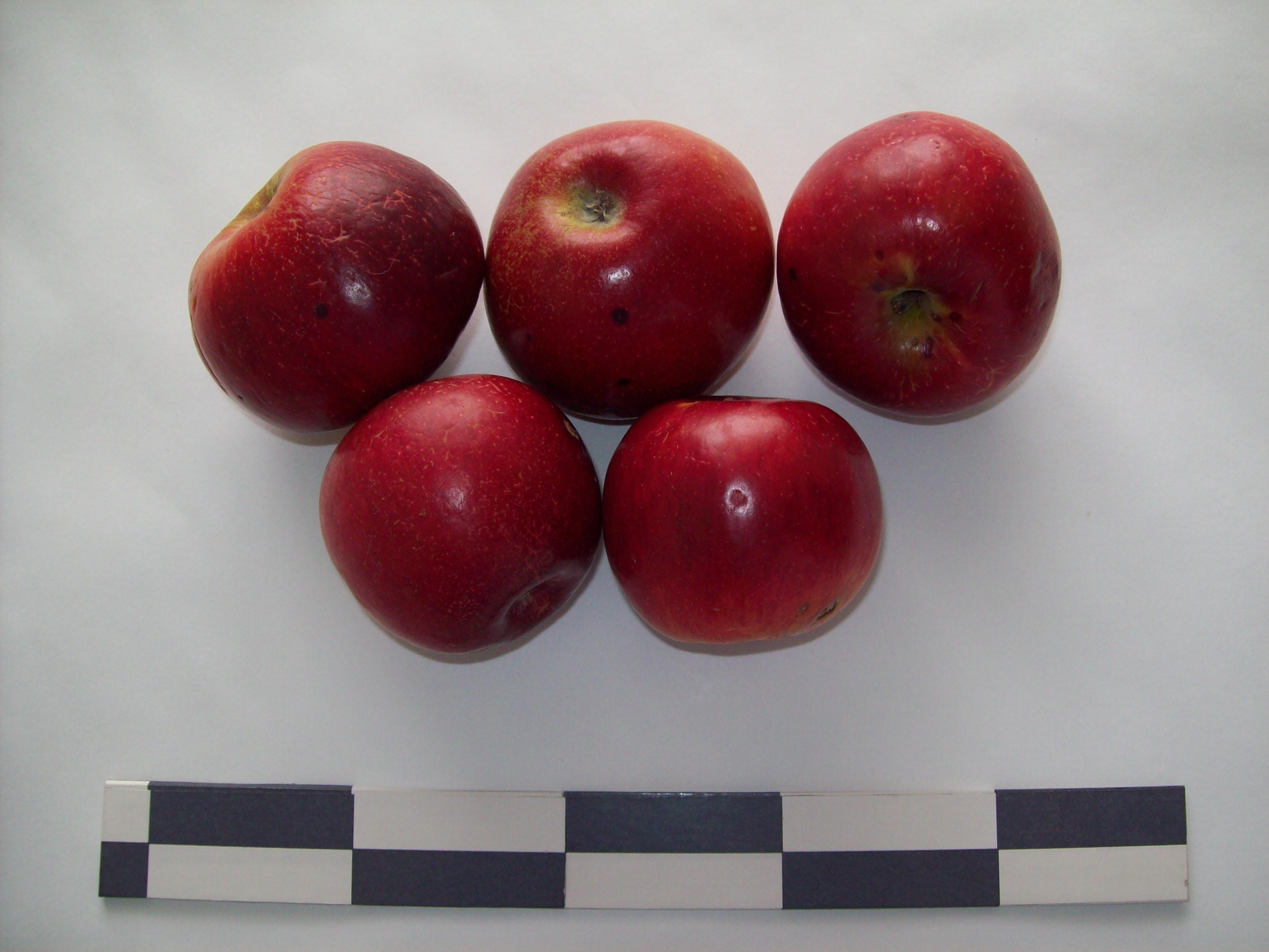 масштабного картинки сорта яблок джонатан как это парадоксально