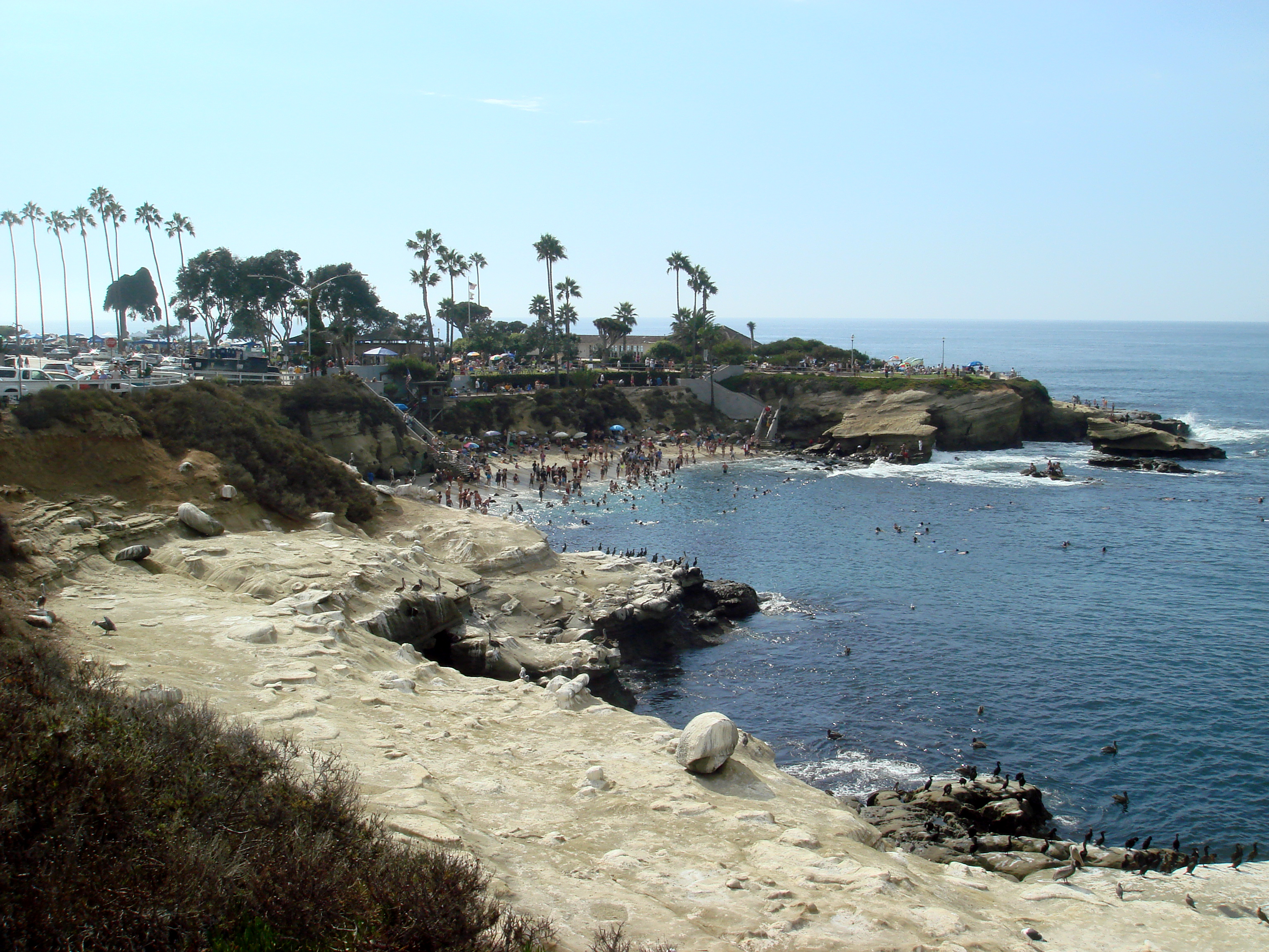 Windansea Beach La Jolla Ca