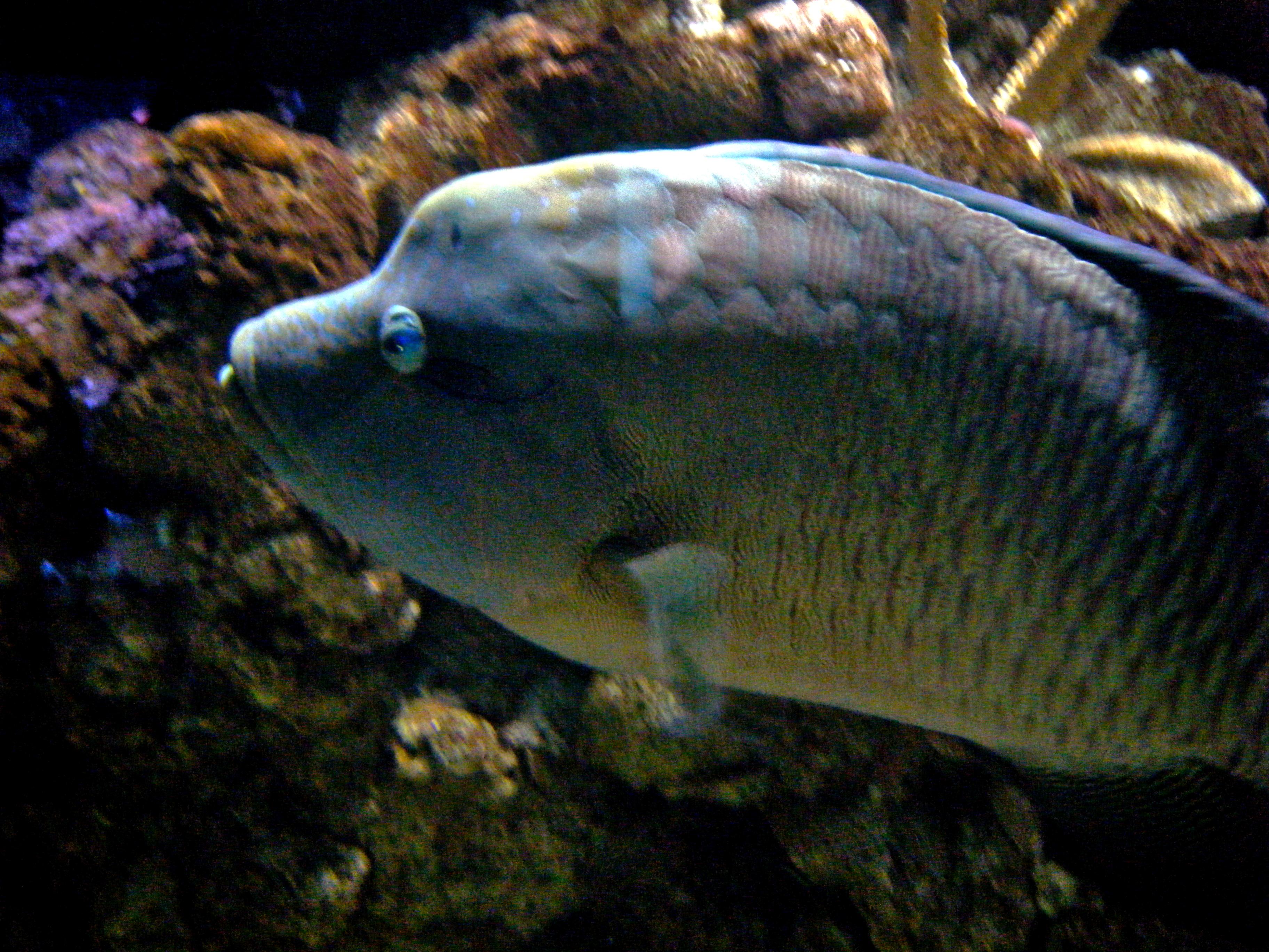 Http Commons Wikimedia Org Wiki File Big Fish Jpg