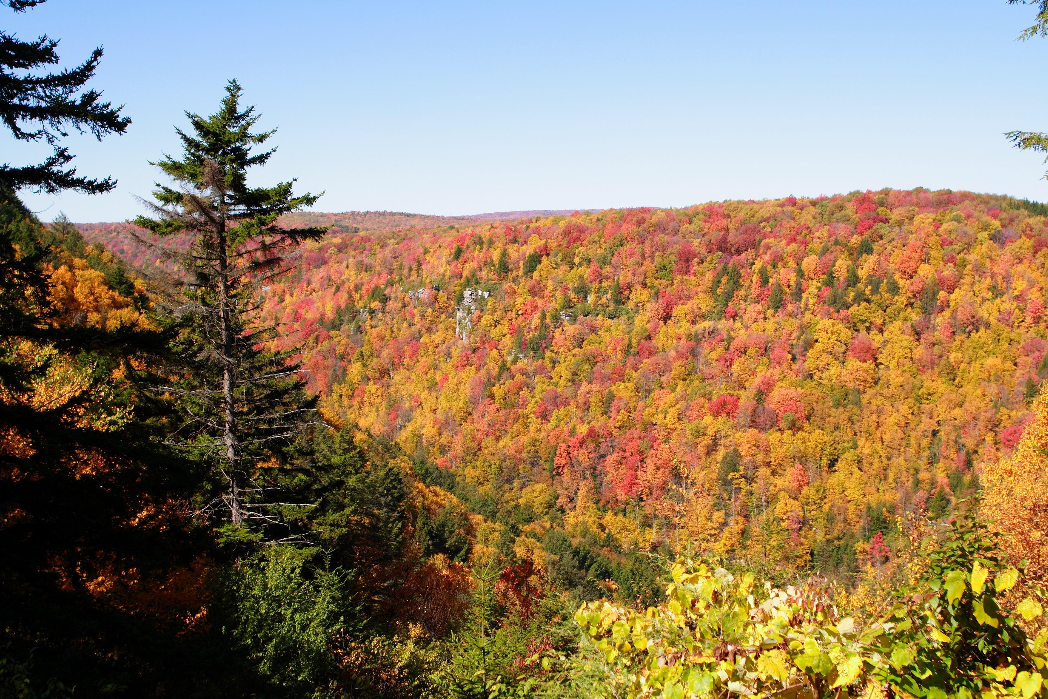 Autumn Colors File Blackwater Canyon Autumn Trees West Virginia
