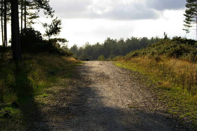 Bridleway over forest road, Rempstone Forest - geograph.org.uk - 262009