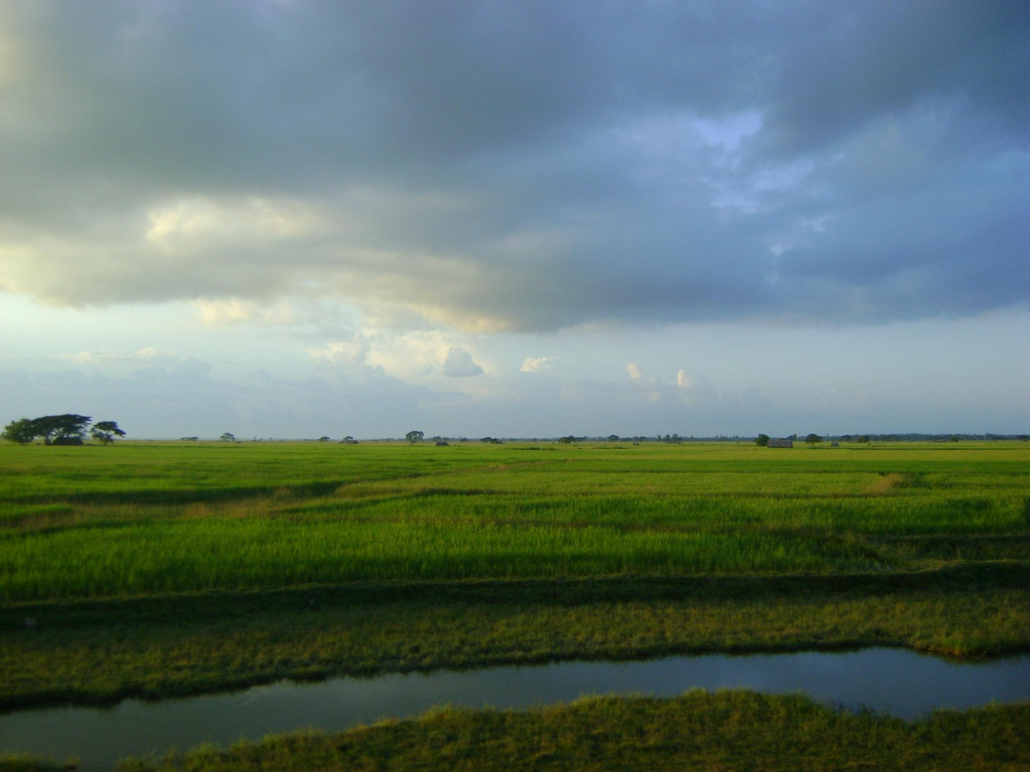 Risfält i Burma