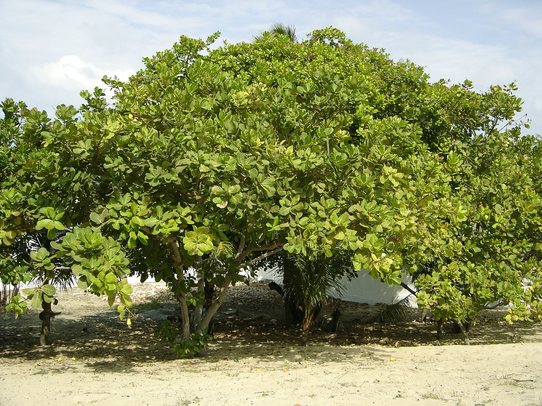 Cashew Tree Blog Title