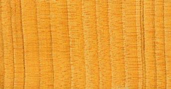Cedrus wood