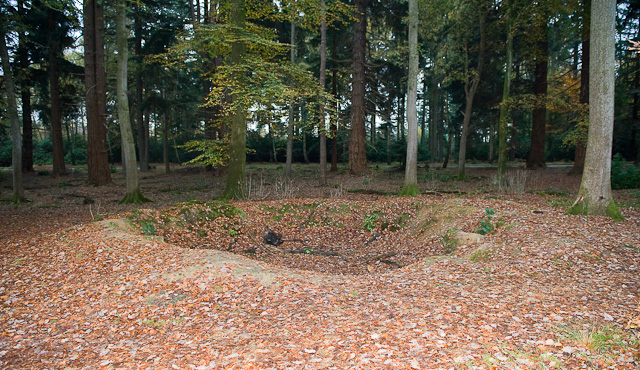 Crater, Tall Trees Trail, Rhinefield - geograph.org.uk - 1578499