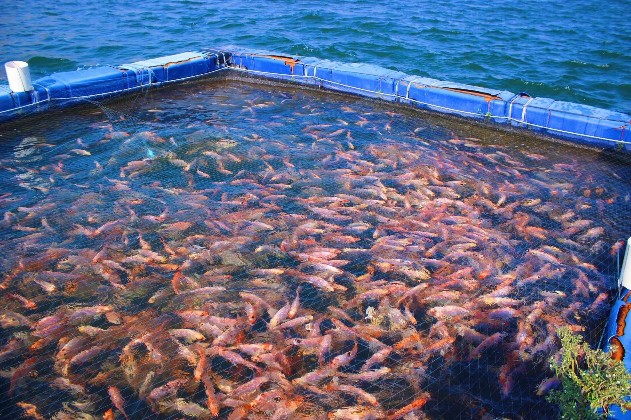 Archivo criadero de wikipedia la enciclopedia for Criaderos de pescados colombia
