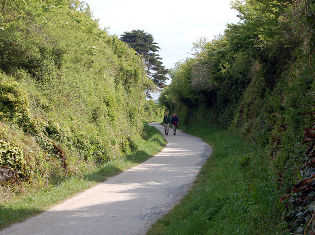 Cutting on the Camel Trail (3) - geograph.org.uk - 1286384